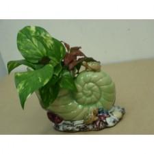 水種植物5