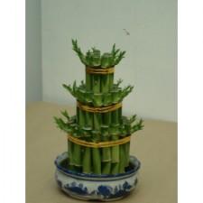 水種植物4