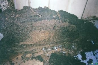 termite14.jpg